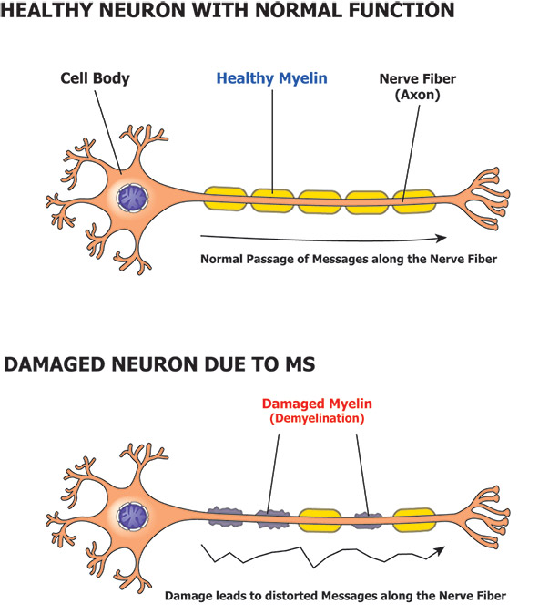 Neurone Diagram